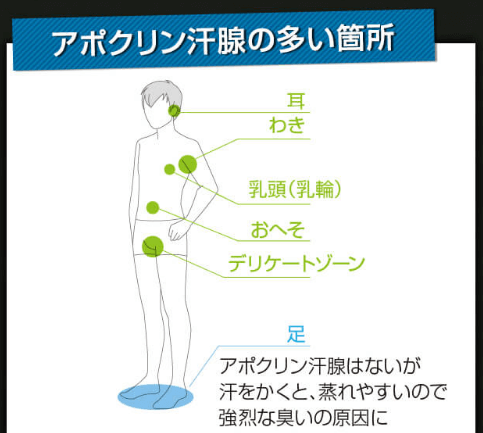 男性のアポクリン線のイラスト
