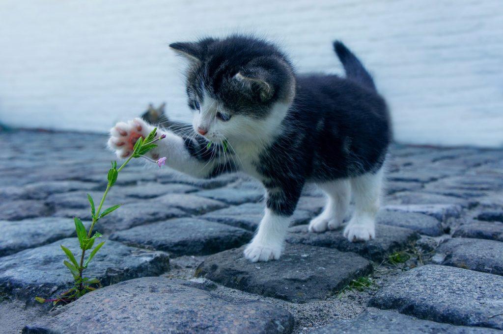 猫 花に触れている