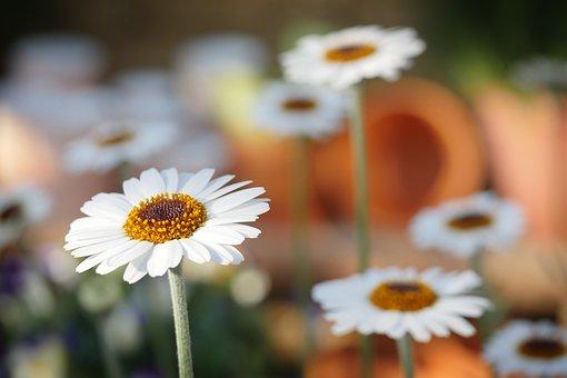 白い花 花畑 キレイ