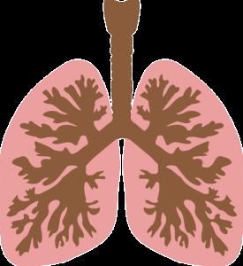 肺のアニメ