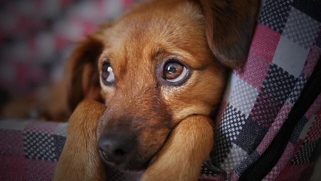 犬 ジーと見ている