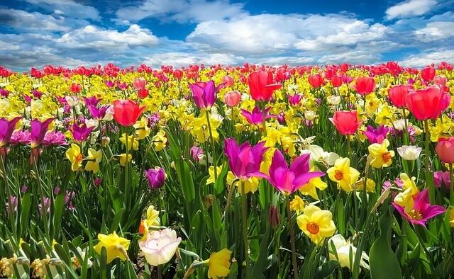 綺麗な花畑 カラフルな色