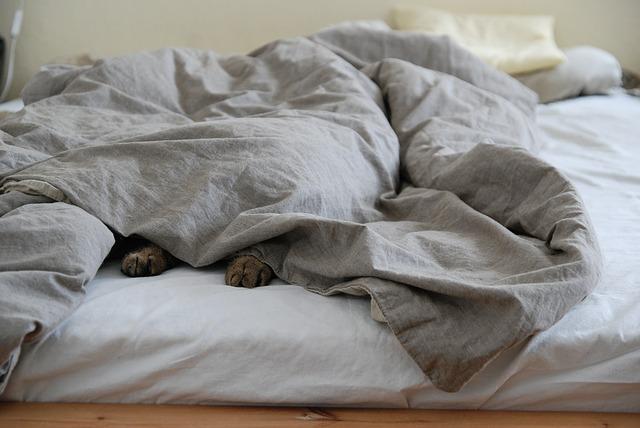 猫 布団をかぶって寝ている