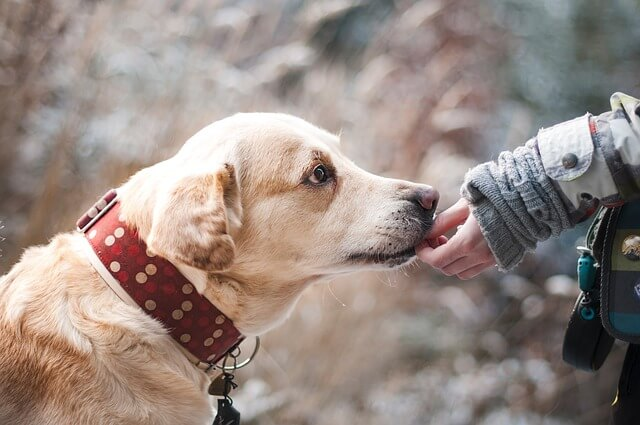犬と人間 ふれあい
