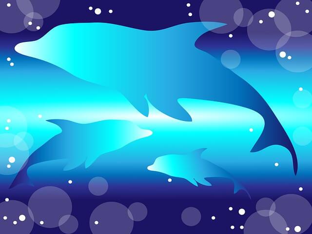イルカが泳いでるイラスト