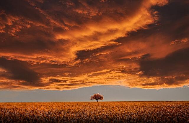 夕暮れ 野原に1本の木