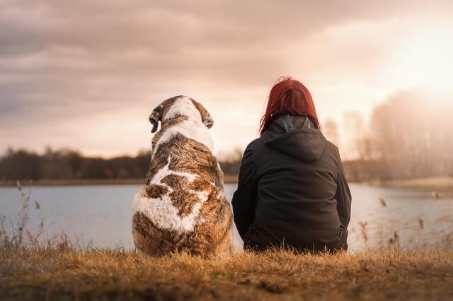 犬と女の子が湖を見ている