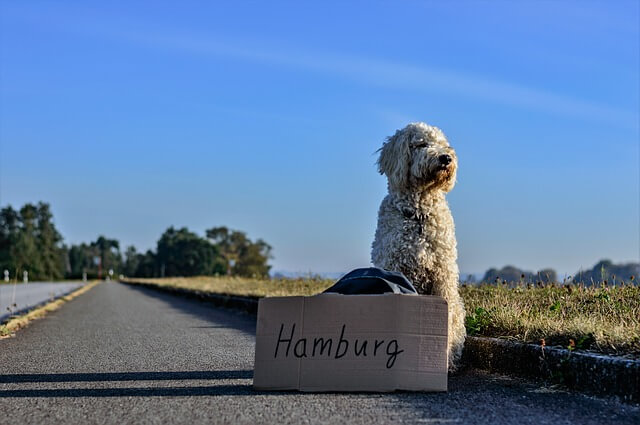 ヒッチハイクする犬