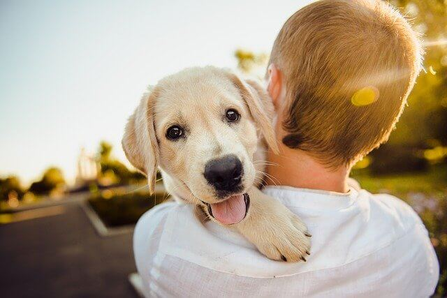 犬を抱っこした女性の写真