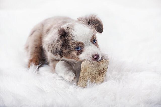 犬が口を隠している写真