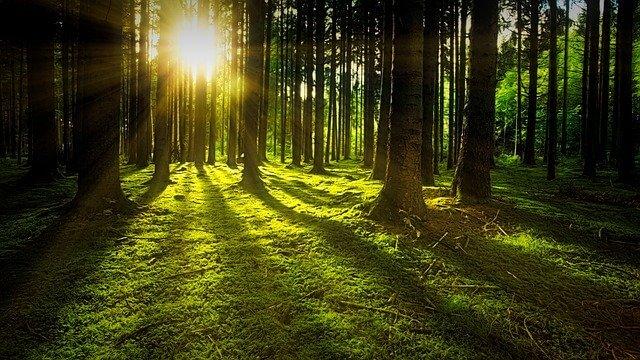 もりの中の風景 森林浴