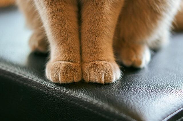 可愛い猫の足